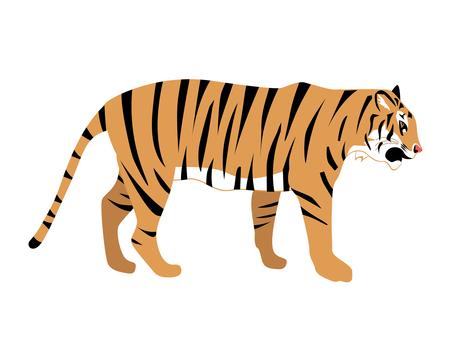 Animal mammal tiger
