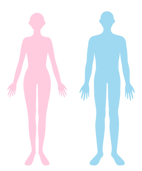 Human body Male and female whole body silhouette