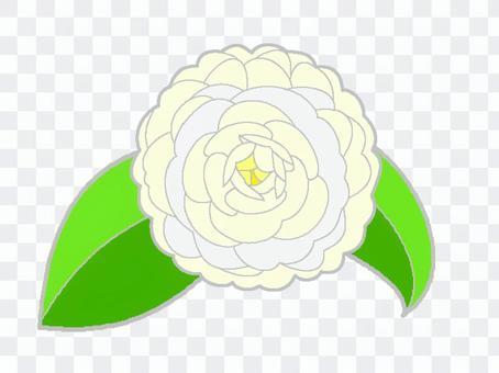 椿(白)4