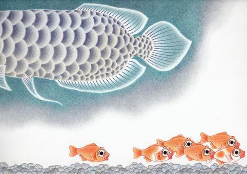 金魚和龍魚