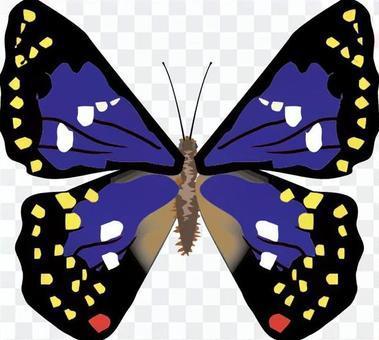 オオムラサキ タテハチョウ科 昆虫 虫