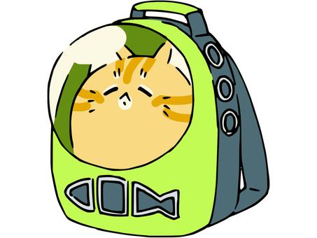 Loose tea tabby cat carry back