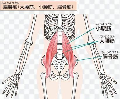 Iliopsoas肌肉