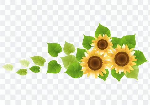 Sunflower 44