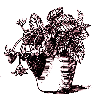 仿古筆劃草莓育苗鍋