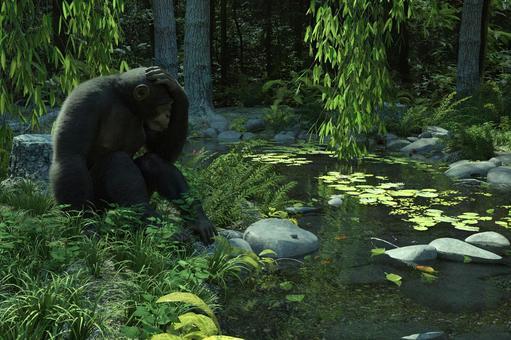 森の中のチンパンジー