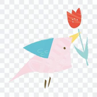 郁金香和鸟类