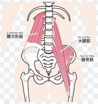 허리 주위의 근육