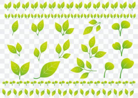 신록의 나뭇잎 여러가지