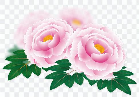 2016 peony flowers