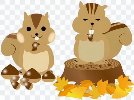 松鼠和樹樁