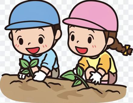 地瓜苗種植兒童免費插畫