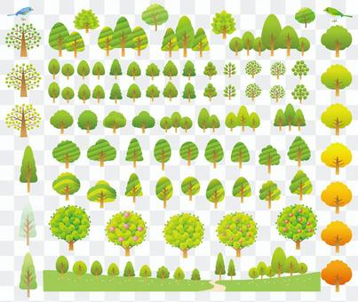 Various sets of trees in the forest