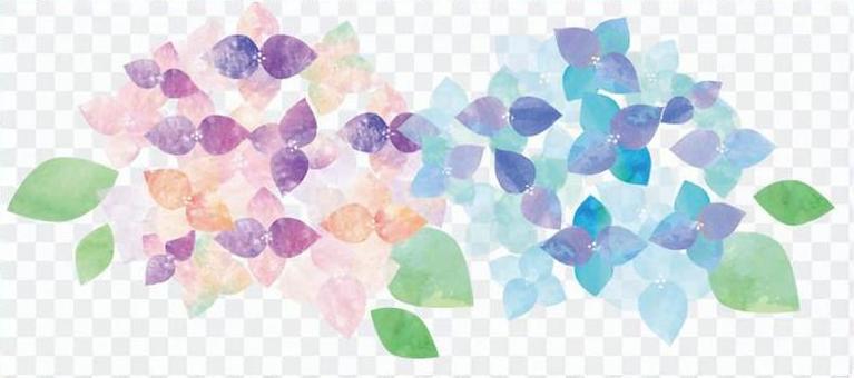 水彩繡球花兩種顏色