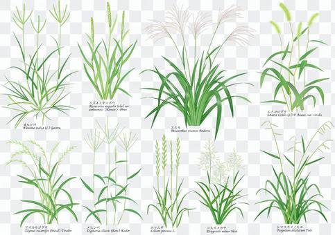 植物清單/ 4/9種草雜草
