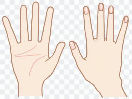 手掌/手背