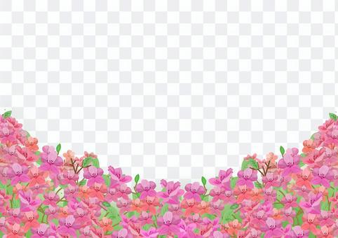 杜鵑花山的插圖