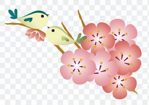 梅花與鳥的插圖