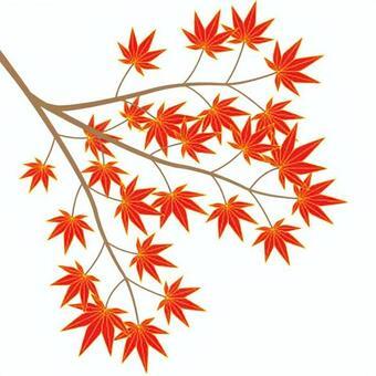 楓樹(cs 2)
