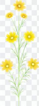 秋向け・コスモス一輪大・黄色