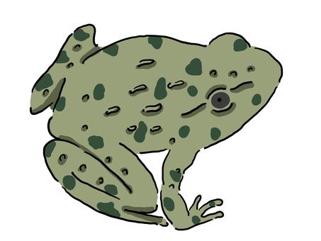 皺巴巴的青蛙