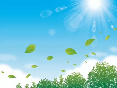 Sky with leaves and sunshine dancing behind leaves