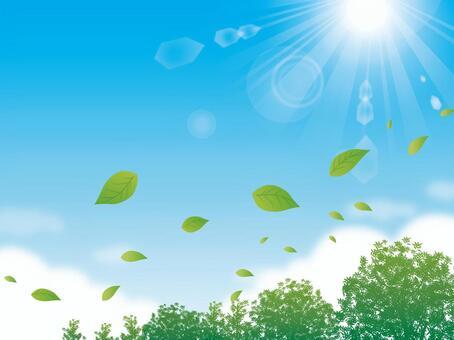 樹葉和陽光在樹葉背後跳舞的天空