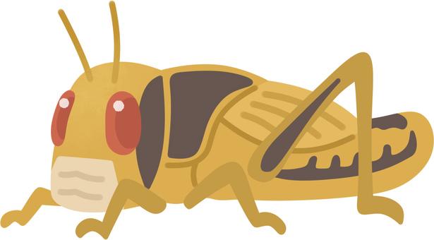 Desert locust (larvae and community fauna)