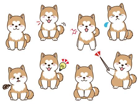 秋田犬的面部表情集