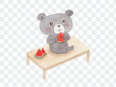 Bear and watermelon