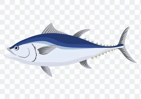金槍魚/金槍魚