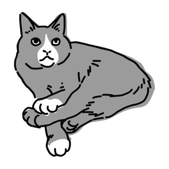 一隻貓放鬆蜜蜂的全身插圖