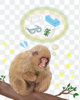 花粉症に苦しむ猿(日本猿)