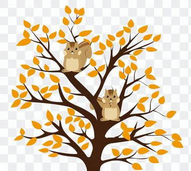 Squirrel and tree