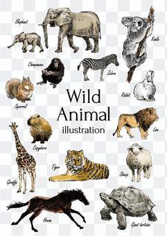 野生動物圖