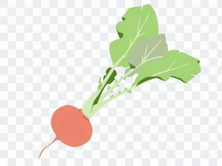 蔬菜13蘿蔔(蘿蔔20天)