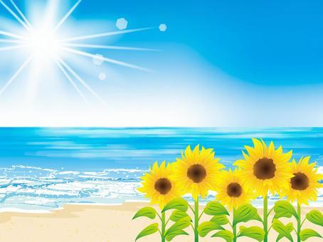 夏天的圖像026