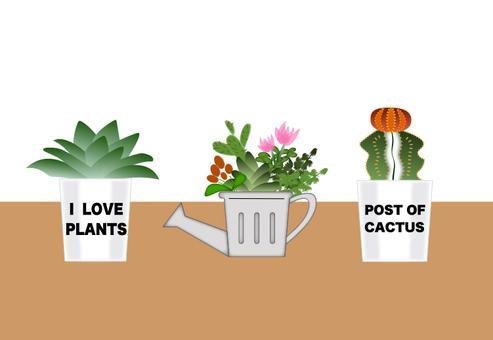 植物盆景的植物