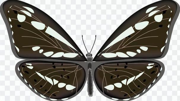 ミスジチョウ 蝶 蝶々 タテハチョウ科