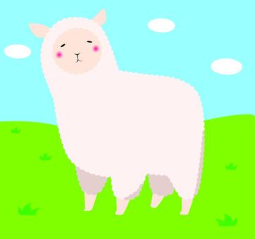 羊駝般的羊