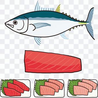 南部藍鰭金槍魚全身魚片生魚片
