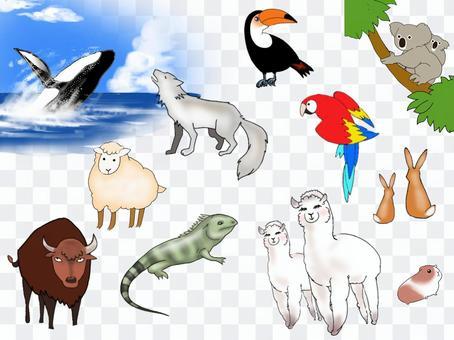 世界動物插圖集