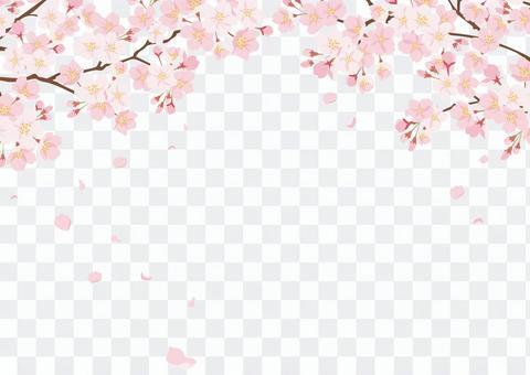 櫻花背景1