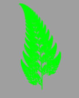 Fern plant leaves
