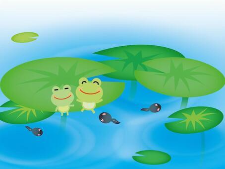 Frog 05