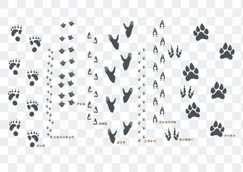 野生動物足跡ブラシセット4