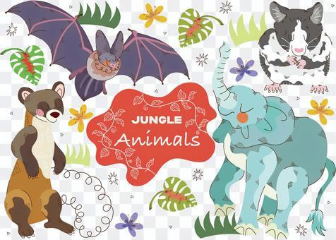 Animals in the jungle 1