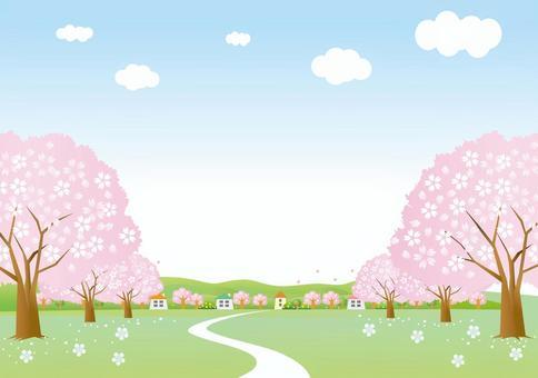 櫻花樹街的風景