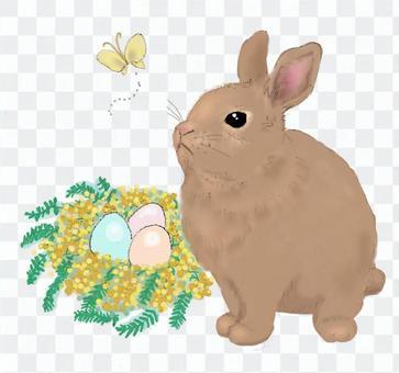 復活節兔子(兔子,雞蛋,含羞草)
