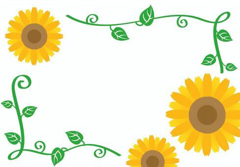 向日葵的框架